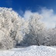 Hoar-frost on trees in winter — Stock Photo