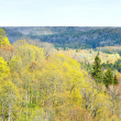 Areal view on Gauja river valley in spring in Sigulda, Latvia — Stock Photo