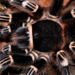 Stock Photo: Balck tarantula