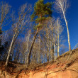Forest landscape in winter — Stock Photo