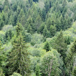 Hills with forest — Stockfoto