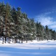 Winter forest in bright sunny day — Foto de Stock