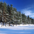 Winter forest in bright sunny day — Foto Stock