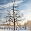 Winter countyside view — Stock Photo
