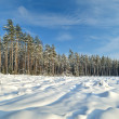 Snow covered sunny winter landscape panorama — Stock Photo