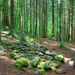 Stock Photo: Dark forest scene