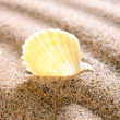 Sea shell on the sandy beach — Stock Photo