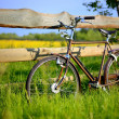 Stock Photo: Old vintage brown bicycle near the fence of a flower field