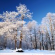 Stock Photo: Frost on tree