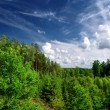 Forest on the hills in Latvia. Wide view. — Stock Photo