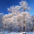 Frost on tree — Stock Photo #32829829