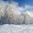 Hoar-frost on trees in winter — Foto Stock