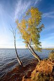 Tree and a lake landscape during Fall season — Stock Photo