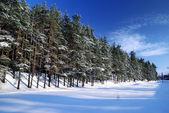 Winter forest in bright sunny day — Stock Photo
