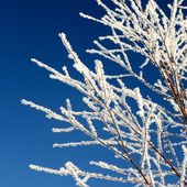 Hoar-frost on tree in winter — Stock Photo