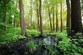 Forest swamp scene — Stock Photo
