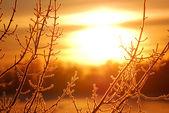 Мороз на дерево на берегу озеро на восходе солнца. силуэт — Стоковое фото