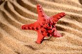 Sea star on the sandy beach — Stock Photo