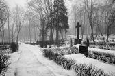 Fog at the cemetery — Stock Photo