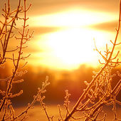 Frost on tree at the lake shore at the sunrise. Silhouette — Stock Photo