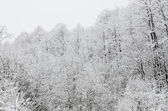 Winter scene with hoar-frost on trees — Stock Photo