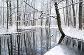 Foresr river in winter — Stock fotografie