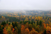 Forest hills covered with mist in fall — Stock Photo