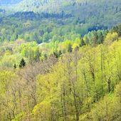 Powierzchniową widok na dolinę rzeki gauja wiosną w sigulda, łotwa — Zdjęcie stockowe