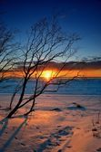 Tree silhouette against colorful sunset at the snowy Baltic sea shore — Stock Photo