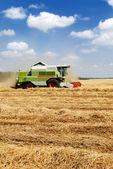 Combine harvester — Stock Photo