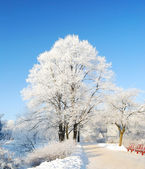Trees covered with snow in a park in Riga, Latvia — Stock Photo