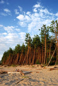 Forest at the sea shore — Stock Photo