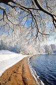 Riva del fiume in inverno — Foto Stock