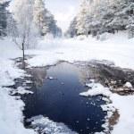 Snow on trees — Stock Photo #32830119