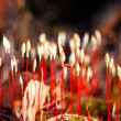 Colourful moss spores — Foto de Stock