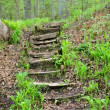 Stairway in forest — Stock Photo