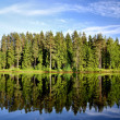 Lake in the forest with reflection — Photo