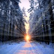 Sun rays in winter forest — Stock Photo
