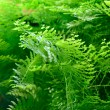 Plants in aquarium — Stock Photo