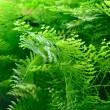 växter i akvariet — Stockfoto