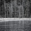 Iced forest lake — Stock Photo