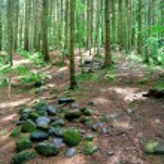 Dark forest scene — Stock Photo