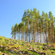 landscape forest — Foto Stock