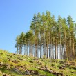 waldlandschaft — Stockfoto