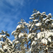 Snow covered winter trees — Stock Photo