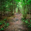 Dark forest scene — Stock Photo