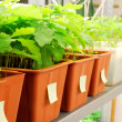 Stockfoto: Plants are being grown in laboratory