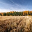 Cereal field in fall season. Latvia — Stock Photo