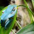 Colorful blue frog in terrarium — Stock Photo