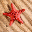 Sea star on the sandy beach — Stock Photo